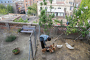 /EN/ Carmen feeds her chickens a few meters away from the caos of the city centre. /ES/ Carmen en el gallinero de su casa a pocos metros del barullo de la ciudad.