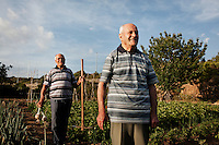 "PERDASDEFOGU, SARDINIA, ITALY - 29 JUNE 2013: (L-R) Brothers Vitalio (87, a retired postman) and Adolfo (90) are here in their vegetable garden in Abbafittania, in the outskirts of Perdasdefogu, the day before Claudia Melis' 100th birthday in Perdasdefogu, Italy, on June 29th 2013.<br /> <br /> Last year, the Melis family entered the Guinness Book of World Records for having the highest combined age of any nine living siblings on earth — today more than 825 years. The youngest sibling, Mafalda – the ""little one"" – is 79 years old.<br /> <br /> The Melis siblings were all born in Perdasdefogu to Francesco Melis and Eleonora Mameli, who had a general store. Consolata, 106, is the oldest, then Claudia, 100; Maria, 98; Antonino, 94; Concetta, 92; Adolfo, 90; Vitalio, 87; Fida Vitalia, 81; and Mafalda, the baby at 79. Their descendants now account for about a third of the village."