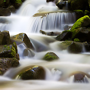 A fresh water stream in the forest of Olympic National Park in Washington State.