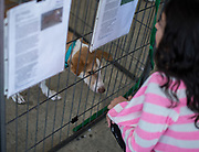 A young girl reads the bio of Myanmar pup Bowie at the Dogs Without Borders Adoption Fair, March 12, 2016.