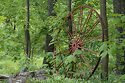 Old wagon wheel against trees