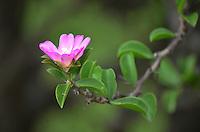 Flower in Isosog
