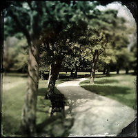 Pathway in a park with trees and bench seats in summer
