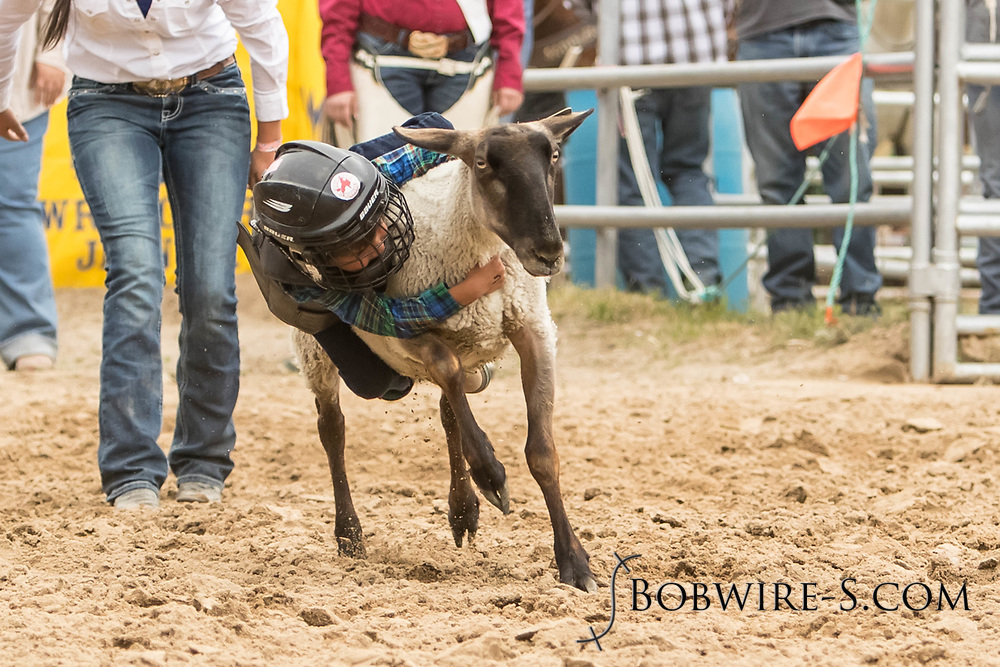 Mutton Bustin' during the third performance of the Elizabeth Stampede on Sunday, June 3, 2018.