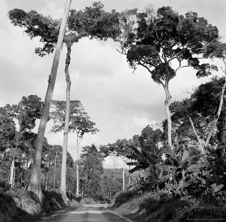 Road, Ituri Forest, Belgian Congo (now Democratic Republic of the Congo), Africa, 1937