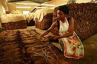 woman sorting tobacco in a cigar factory in Villas Hernandez, Dominican Republic-photograph by Owen Franken