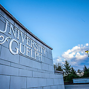 University of Guelph sign welcomgin students and residents to campus. Photo by Mido Melebari