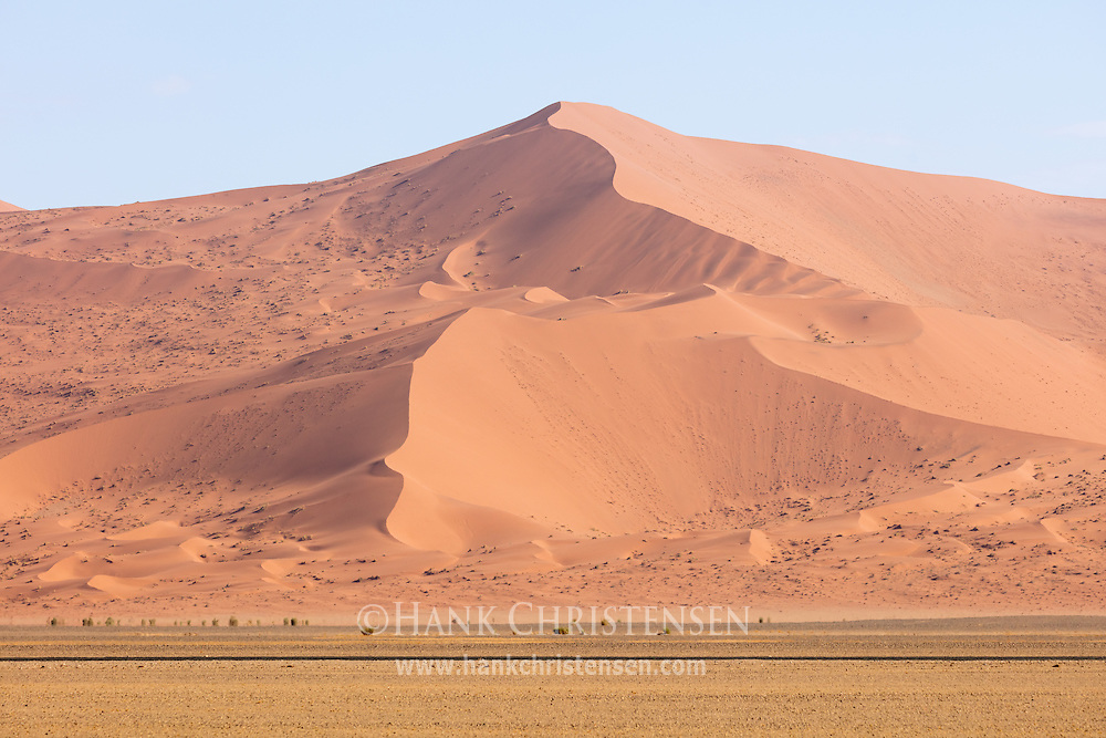 The massive dunes of Namibia dwarf the trees growing in the valley below, Namib-Naukluft National Park, Namibia.