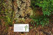 Interpretive sign on the Trail of the Cedars, Glacier National Park, Montana USA