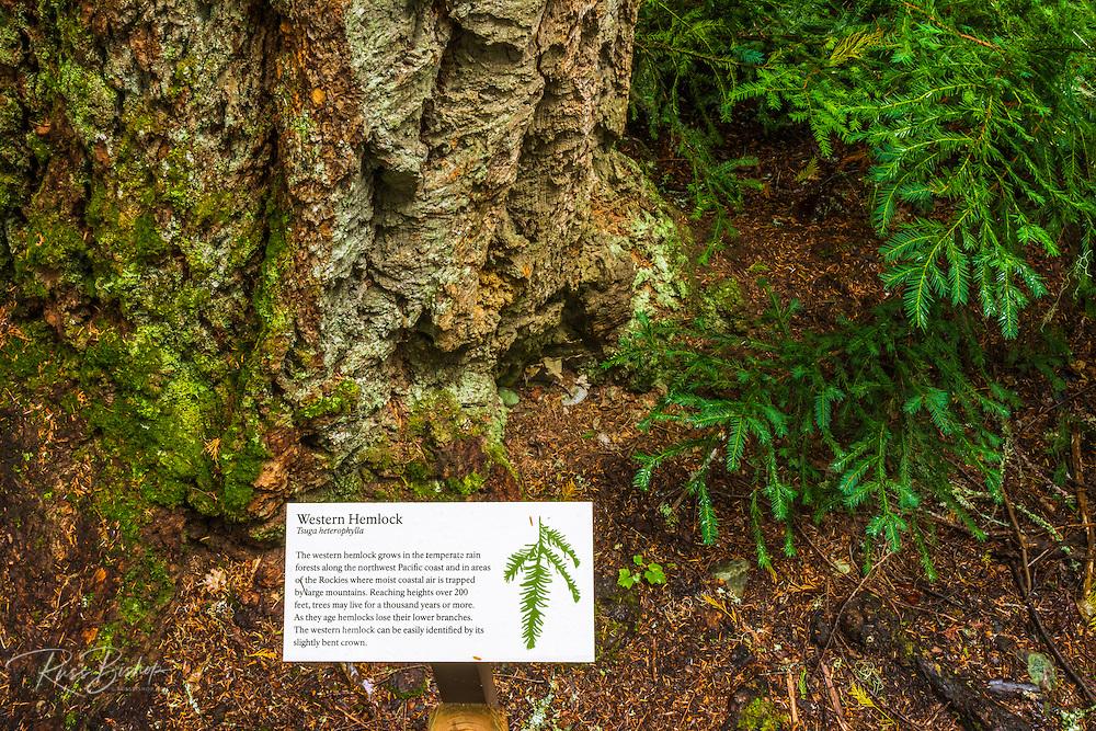 Interpretive sign on the Trail of the Cedars, Glacier National Park, Montana USA