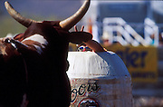 "14 APRIL 2002 - CAVE CREEK, ARIZONA, USA: Rodeo bullfighter ""Hollywood"" Don Yates taunts a bull from the relative safety of his barrel at the Cave Creek Fiesta Days Rodeo in Cave Creek, Arizona, April 14, 2002. .PHOTO BY JACK KURTZ"