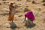 Women agricultural workers in bright saris at Jaswant Garh in Rajasthan, Western India