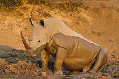 White Rhinos South Africa