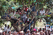 Dar es Salaam, Tanzania - 10/1/15 - People climb a tree to get a better view of an opposition rally in Temeke municipality in Dar es Salaam, Tanzania on October 1. Tanzania heads to the polls on October 25. Photo by Daniel Hayduk