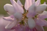 Flowers Close up in natural habitat Photo Piotr Gesicki