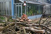"""Mannheim. 02.01.18   <br /> Luisenpark. Feature im Pflanzenschauhaus. Viele Besucher, darunter Familien, nutzen die """"Freien Tage"""" nach Weihnachten und Neujahr für einen Besuch im Luisenpark.<br /> - Zebramangusten wärem sich unter einer Heizlampe <br /> Bild: Markus Prosswitz 02JAN18 / masterpress (Bild ist honorarpflichtig - No Model Release!) <br /> BILD- ID 00451  """
