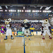 Philadelphia Eagles SWOOP (Center) leads the mascots in a dance routine during a halftime show of a NCAA college basketball game against #9 Delaware and Northeastern Sunday, Feb. 26, 2012 at the Bob Carpenter Center in Newark, Del.