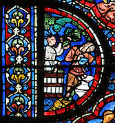 Noah and a helper harvesting grapes and crushing them to make wine, from the Life of Noah stained glass window, 13th century, in the nave of Chartres cathedral, Eure-et-Loir, France. Chartres cathedral was built 1194-1250 and is a fine example of Gothic architecture. Most of its windows date from 1205-40 although a few earlier 12th century examples are also intact. It was declared a UNESCO World Heritage Site in 1979. Picture by Manuel Cohen