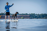 Stand Up Paddling SUP with a dog on Lake Superior in Marquette, Michigan.