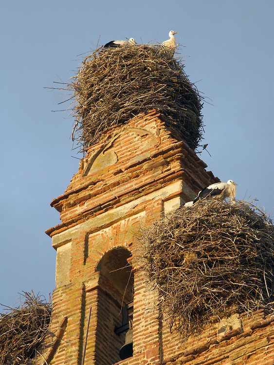 As the sun went down, the storks returned to their nests on this church tower. In North Spain, many churches had stork nests and in some cases, locals provided structures for them to build their nests.
