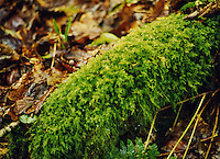 Forest floor with moss and autumn leaves