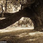 Magnolia Cemetery, Charleston SC