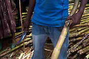 A man selling sugar cane at the market in Finote Selam, Ethiopia.