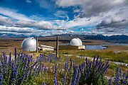 Blue flowers. Mount John Observatory is run by the University of Canterbury, at Lake Tekapo, in the Southern Alps, South Island, New Zealand.