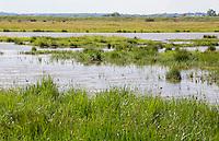 Wetland and marsh habitat at Old Hall Marshes RSPB Reserve, Essex, United Kingdom