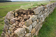 Collapsed section of Roman Hadrian's Wall, once the northern frontier of Rome's empire from Barbarian tribes.