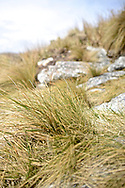 Tussock Grass. Administered as part of the Argentine province of Tierra Del Fuego, Staten Island has been off limits to tourism since 1923 when it was decreed a Natural reserve for Fur seals. This was the first time a foreign-flagged vessel in history sailed into the protected areas and around the Island.