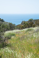 Photo Malibu landscape wall art. native grasses, blue ocean, Charmlee Wilderness Park, hiking, nature, sky, greenery. Santa Monica Mountains, Los Angeles, Westside, Southern California landscape photography. Matted print, limited edition. Fine art photography print.