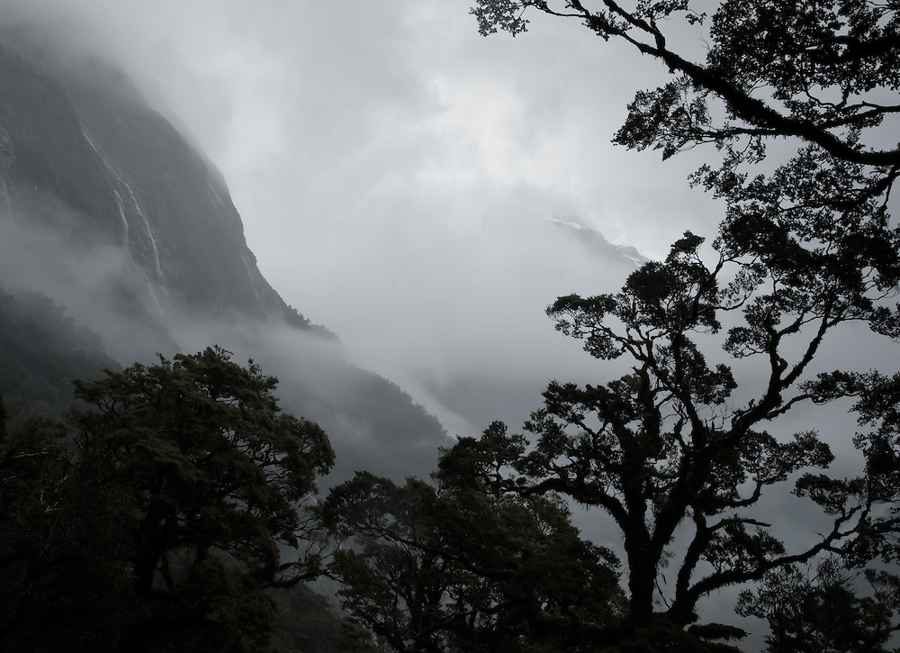 Trees silhouetted against waterfalls as they emerge from overhanging clouds and mist in the subalpine rainforests of the Arthur Valley; Milford Track, New Zealand