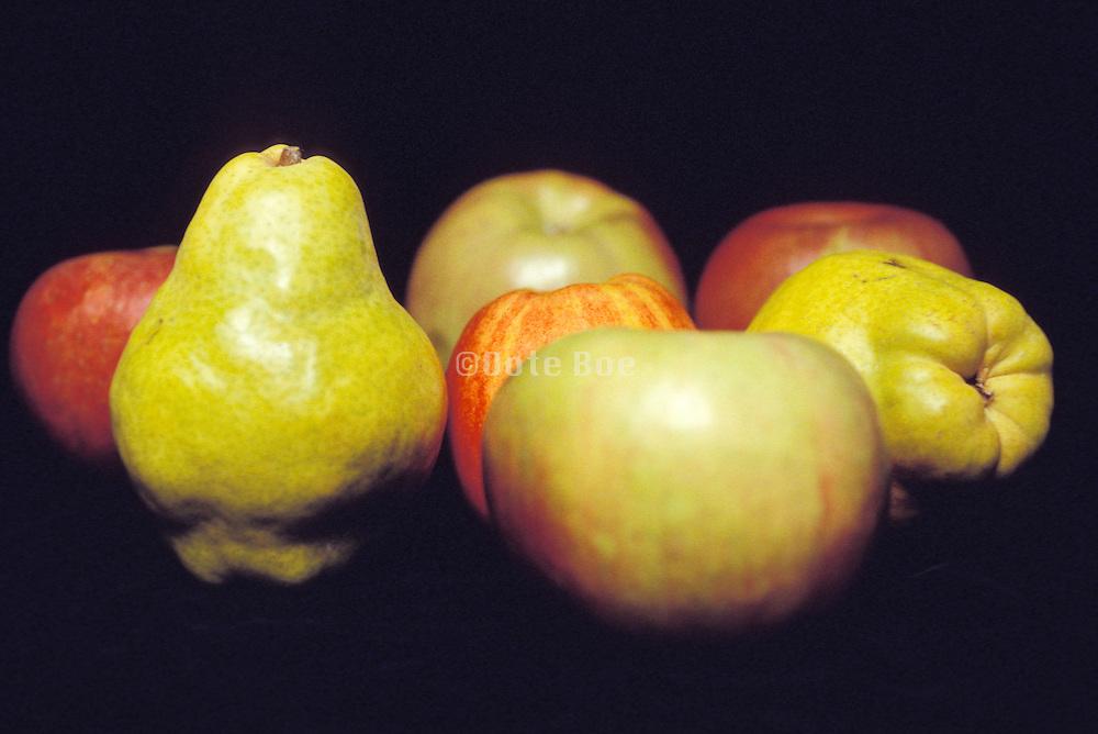 still life of fruit arrangement in studio