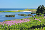 Fireweed along the Gulf of St. Lawrence<br /> Priest Pond<br /> Prince Edward Island<br /> Canada