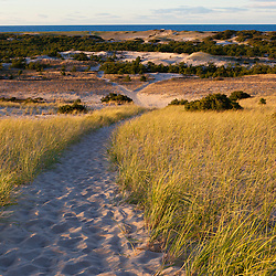 A trail in the Provinceland Dunes in Cape Cod National Seashore in Provincetown, Massachusetts.