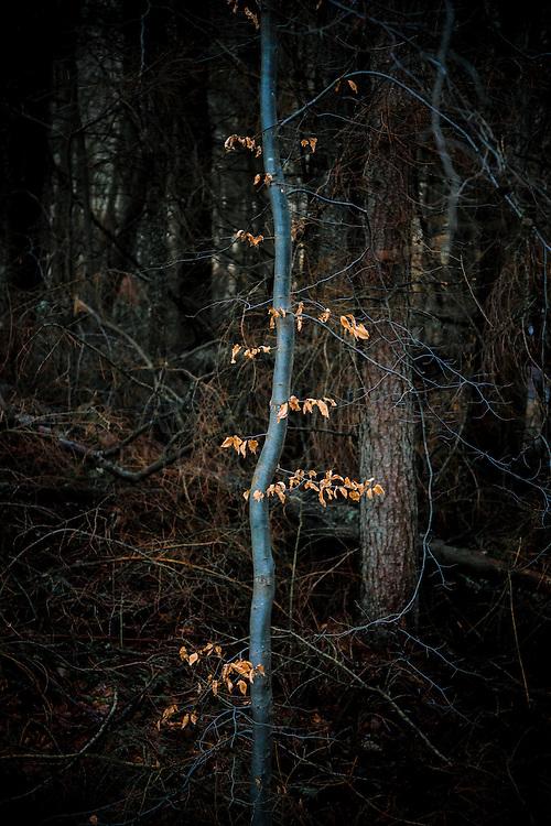 Wee tree, Lennox Castle estate, Lennoxtown