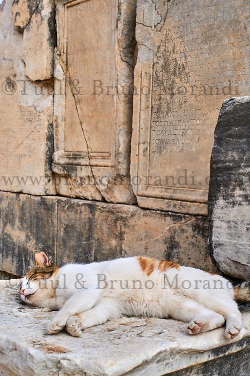 Turquie, province d'Izmir, ville de Selcuk, site archéologique d'Ephese // Turkey, Izmir province, Selcuk city, archaeological site of Ephesus