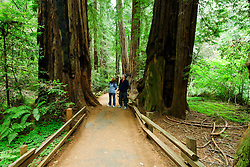California, San Francisco: A couple amid the redwoods at Muir Woods..Photo #: 33-casanf81061.Photo © Lee Foster 2008
