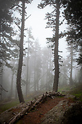Moody forest in the fog. Col de Mantet, Pyrenees Orientales, France. Reserve Naturelle nationale de Mantet.