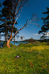 Yellow Island, San Juan Islands, Washington, US
