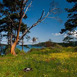 Yellow Island, San Juan Islands, Washington, US