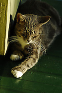 The Six-Toed Cats of Ernest Hemingway House in Key West, Florida