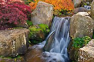 A small waterfall and autumn foliage on acer trees in the rock garden at RHS Wisley Garden, Woking, Surrey, UK