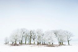 Trees in the snow and ice, winter at Bradgate Country Park, Leicestershire, England, UK.