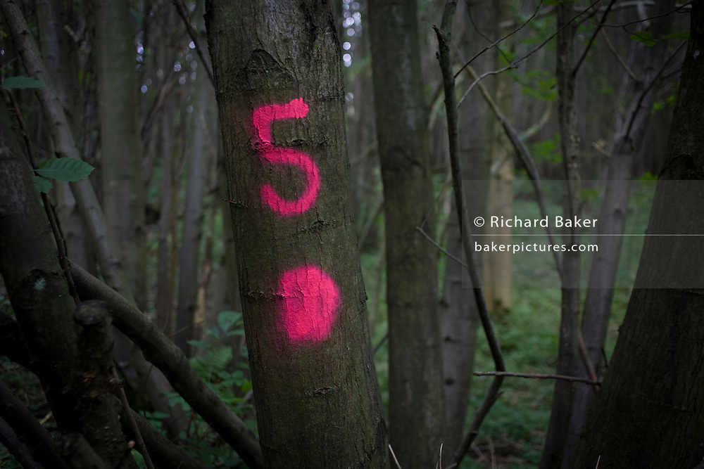 The number 5 has been sprayed in aerosol on to tree bark to identify their location in an English wood