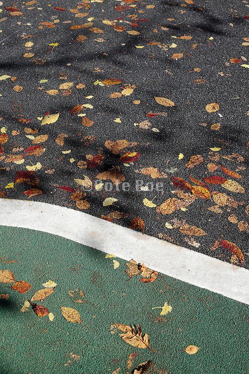 autumn leaves embedded into asphalt road surface