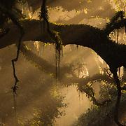 Louisiana Wilds