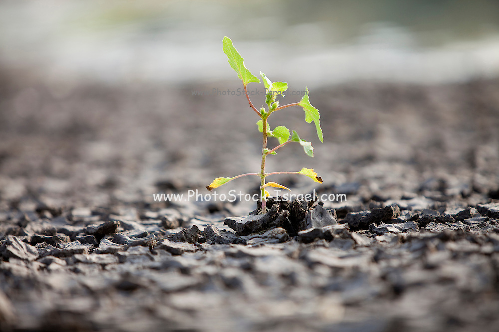 Growth out of hardship a small green shoot breaking out of the arid ground