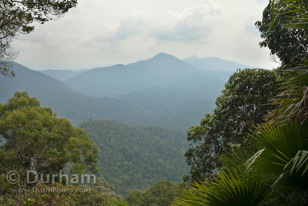 Rainforest seen from a high ridge in Endau-Rompin National Park, Malaysia. This humid jungle is one of the world's oldest rainforest.  It has survived, untouched by the ice ages, for 130 million years.